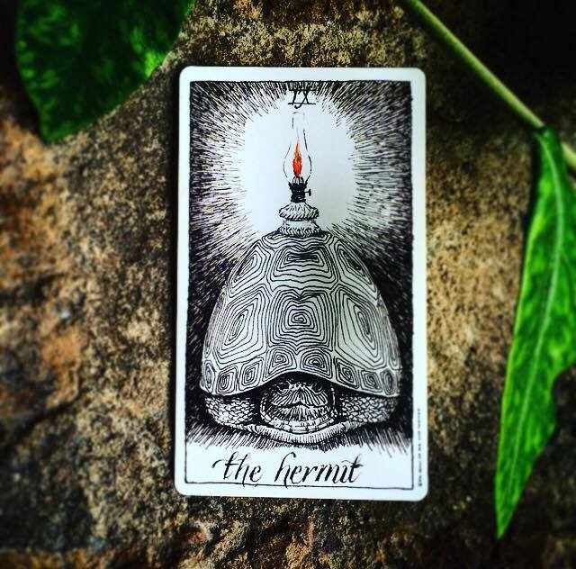 the hermit the wild unknown tarot