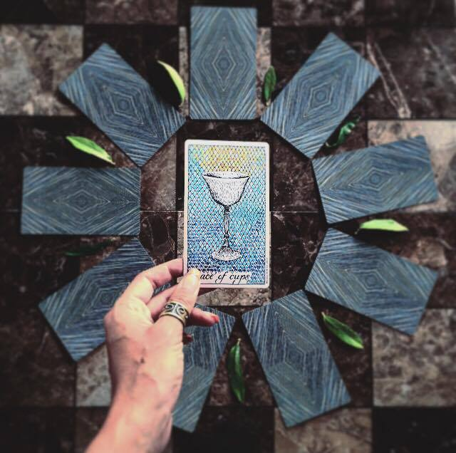 Ace of Cups The Wild Unknown Tarot